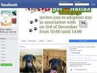 Dog Valley Rescue Center Website Screenshot